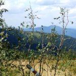 Okraglik_2012_63