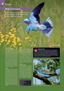 encyklopedia_ptakow_2015_7