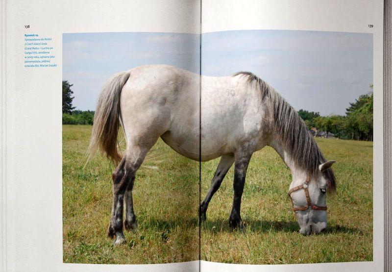 Konie_huculskie_4
