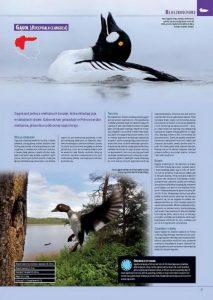 encyklopedia_ptakow_2015_5